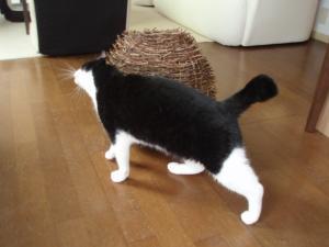 猫のすりぃ~