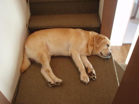 階段と同じ幅