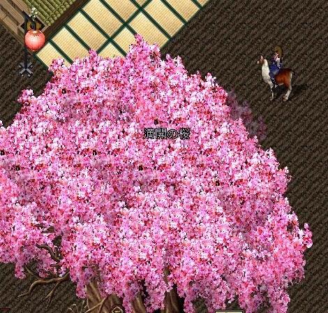 お花見大宴会2011 千年桜