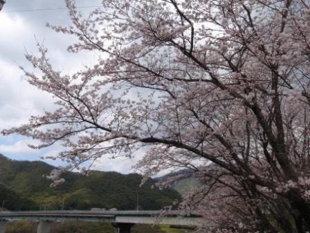 桜前線Ⅳ3