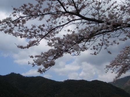 桜前線Ⅳ2