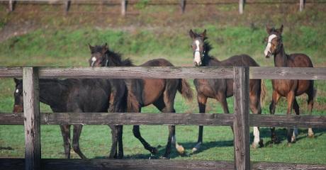 10・1歳・4頭牝馬たち