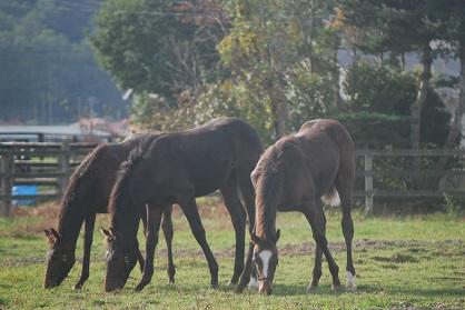 10・3日目・仲良し牝馬
