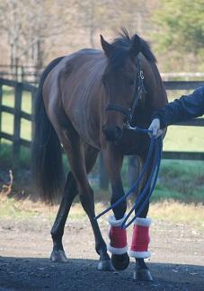 11・初冬・2歳馬