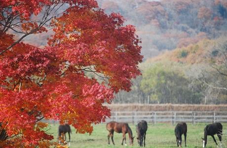 11・初冬・紅葉と馬