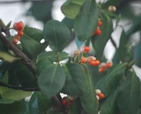 11・牡・オレンジ色の実