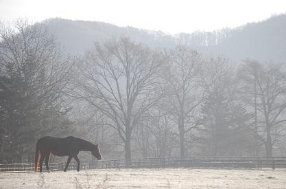 11・繁殖・朝の馬
