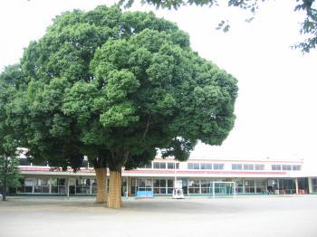 2010 08 15 幼稚園1