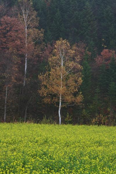 紅葉とキカラシ