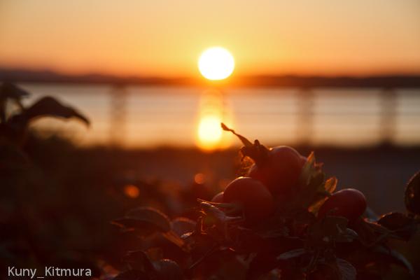 夕日とハマナス