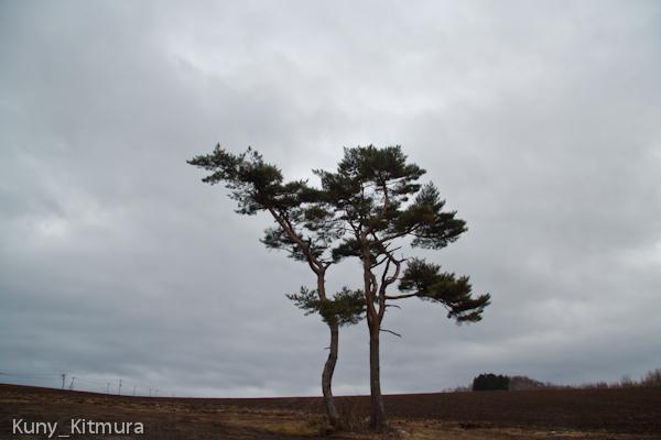 両思いの木