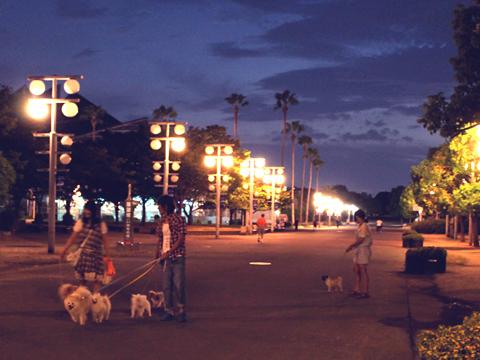 20100912.jpg