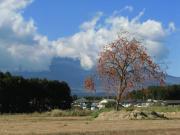 2011_11_ 25 カマド・柿と富士