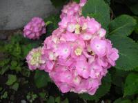 桜太 6ヶ月