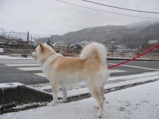 里に雪_1555