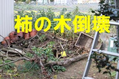 柿の木waq