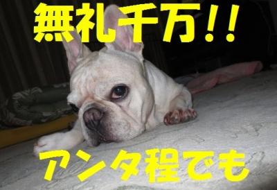 無礼pyf