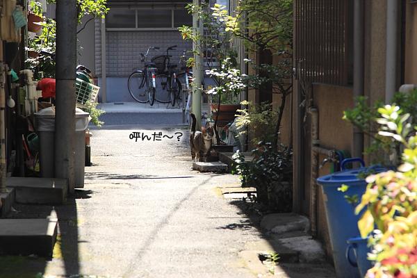 20100918-2.jpg