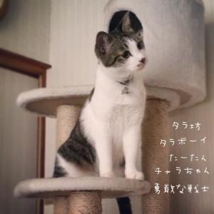 fc2blog_201412132346283af.jpg
