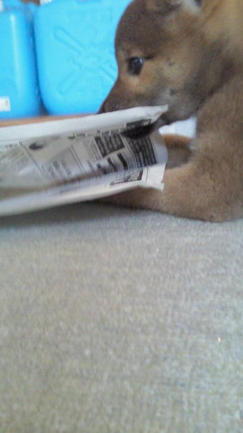 新聞とたわむれる