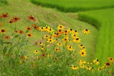 花咲く畦道