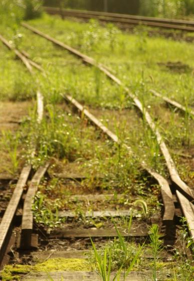 夏草に埋もれた線路