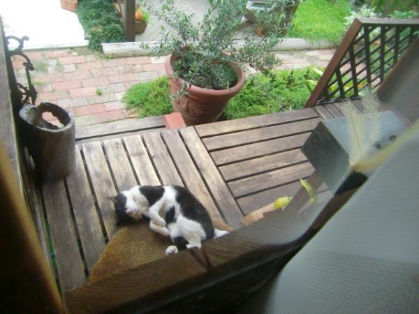 猫にデッキを貸しています
