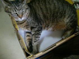 1月12日箱猫