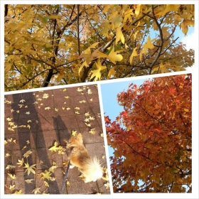 11月8日紅葉
