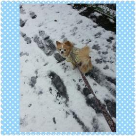 12月20日雪のラテくん