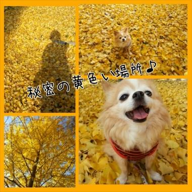 PhotoGrid_1417135308557.jpg