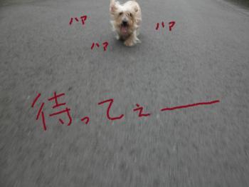 067_convert_20101126003932.jpg
