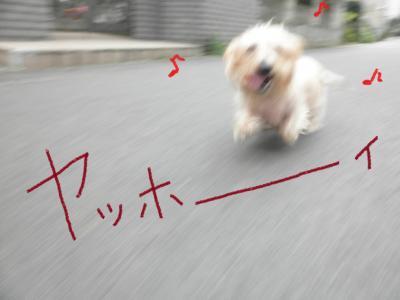 068_convert_20101126004003.jpg