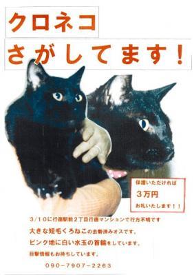 546949_338776416174808_178691735516611_987903_1272455971_n迷子黒猫