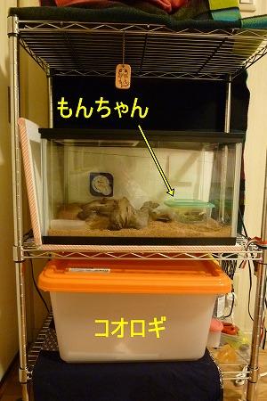 もんちゃん 家2