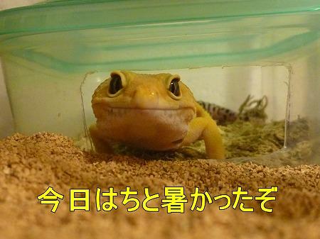 もんちゃん 004