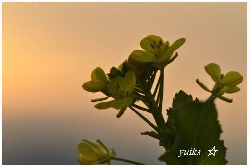 彩雲 (2)