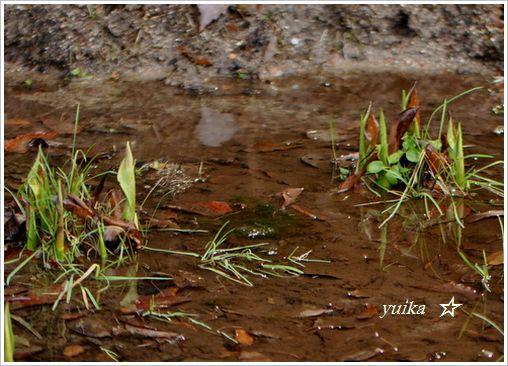 湿地127