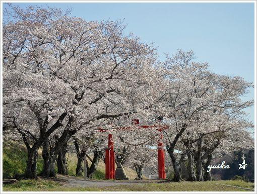 桜408-2