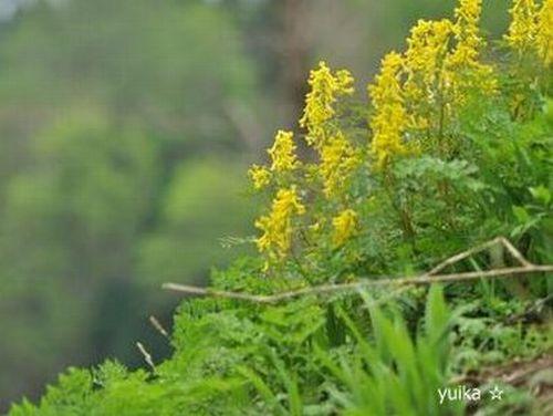 黄色の花504