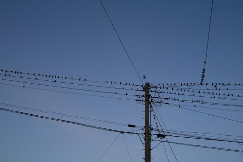 20130923 鳥3