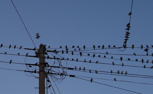 20130923 鳥3TR_1