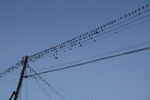 20130923 鳥7