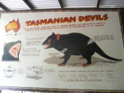 タスマニアンデビル看板