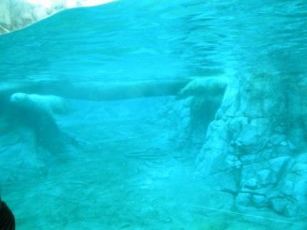 水中シロクマ