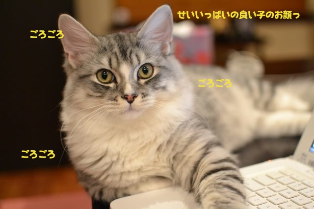 すーちゃんとコンピューター3