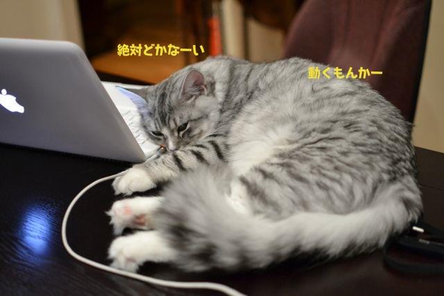 すーちゃんとコンピューター1