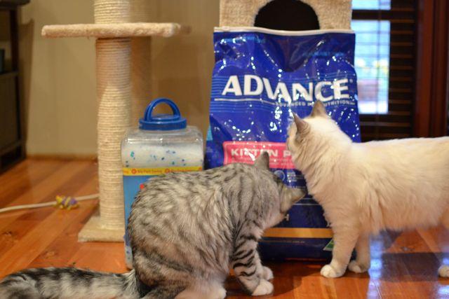 猫砂とカリカリ2