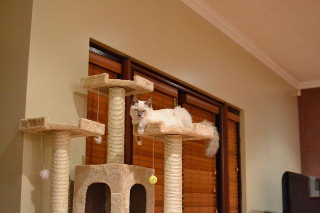 猫タワー10