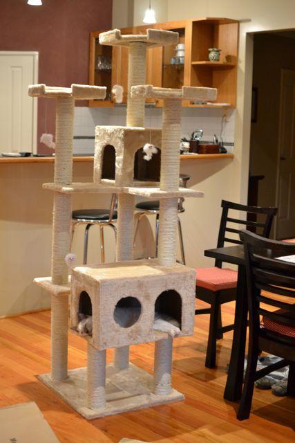 猫タワー6